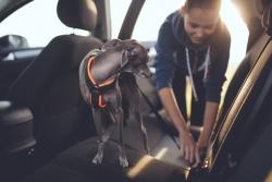Zvíře na cestách: Jak bezpečně cestovat vautě se psem?